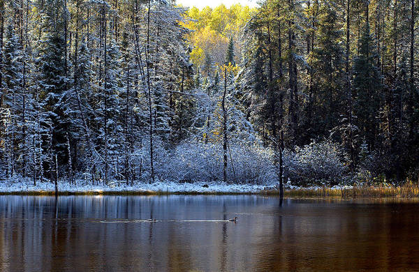 Photograph - First Snow by Doug Gibbons
