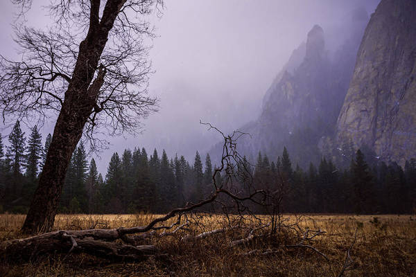 Photograph - First Snow In Yosemite Valley by Priya Ghose