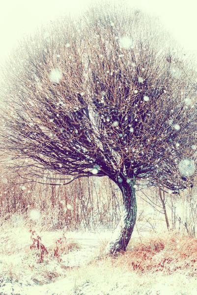 First Snowfall Wall Art - Photograph - First Snowflakes by Jenny Rainbow
