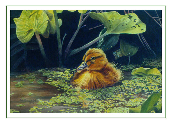 Painting - First Spring - Mallard Duckling by Bob Nolin