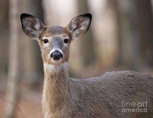 Wall Art - Photograph - First Winter, Whitetail Deer by Steve Gass