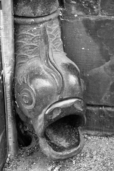Wall Art - Photograph - Fish Drain Spout Detail by Teresa Mucha