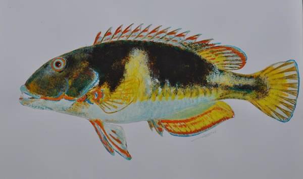 Painting - Fish Gear by Eduard Meinema