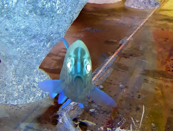 Photograph - Fish Mug Mmaaa Inverted by Rob Hans