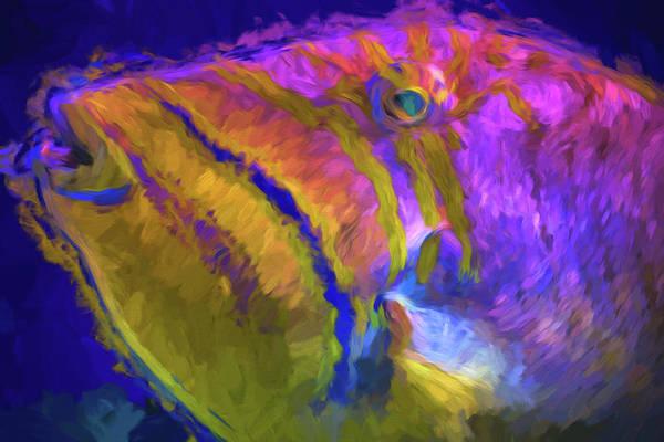 Photograph - Fish Paint Dory Nemo by David Haskett II