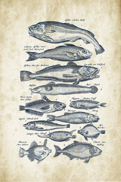 Wall Art - Digital Art - Fish Species Historiae Naturalis 08 - 1657 - 01 by Aged Pixel