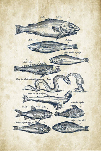 Wall Art - Digital Art - Fish Species Historiae Naturalis 08 - 1657 - 02 by Aged Pixel