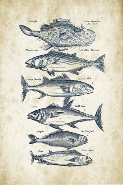 Wall Art - Digital Art - Fish Species Historiae Naturalis 08 - 1657 - 03 by Aged Pixel