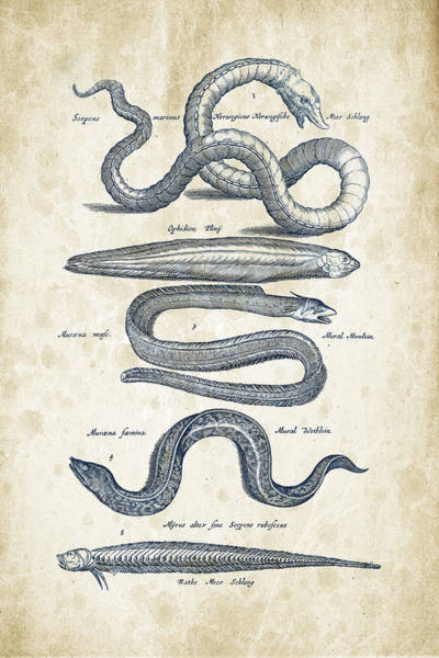 Wall Art - Digital Art - Fish Species Historiae Naturalis 08 - 1657 - 05 by Aged Pixel