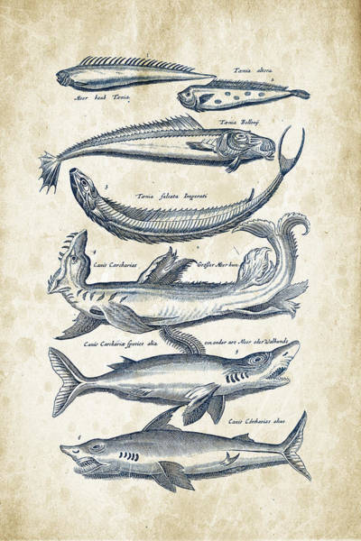 Wall Art - Digital Art - Fish Species Historiae Naturalis 08 - 1657 - 06 by Aged Pixel