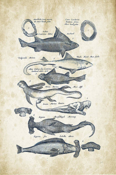 Wall Art - Digital Art - Fish Species Historiae Naturalis 08 - 1657 - 07 by Aged Pixel