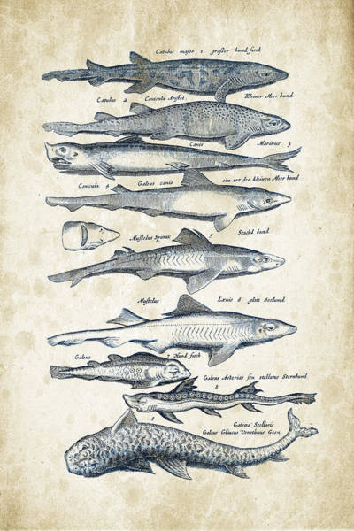 Wall Art - Digital Art - Fish Species Historiae Naturalis 08 - 1657 - 08 by Aged Pixel