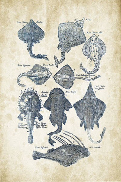 Wall Art - Digital Art - Fish Species Historiae Naturalis 08 - 1657 - 11 by Aged Pixel
