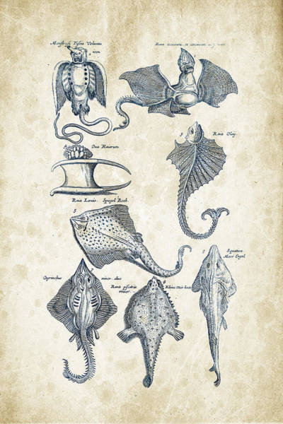 Wall Art - Digital Art - Fish Species Historiae Naturalis 08 - 1657 - 12 by Aged Pixel