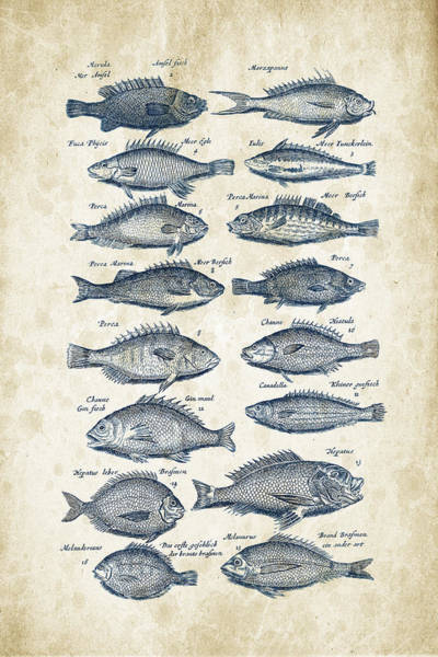 Wall Art - Digital Art - Fish Species Historiae Naturalis 08 - 1657 - 14 by Aged Pixel