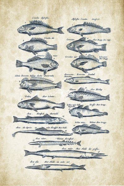 Wall Art - Digital Art - Fish Species Historiae Naturalis 08 - 1657 - 15 by Aged Pixel