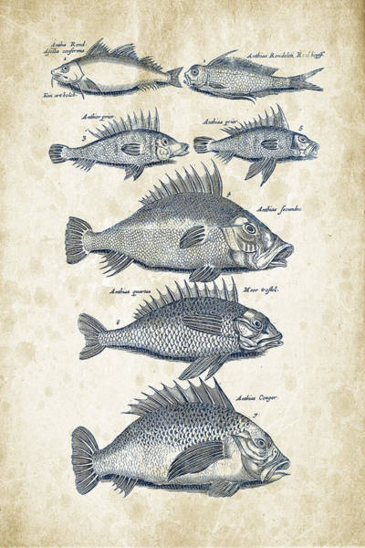 Wall Art - Digital Art - Fish Species Historiae Naturalis 08 - 1657 - 16 by Aged Pixel