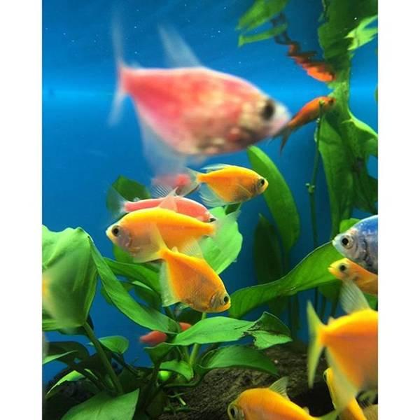 Wall Art - Photograph - Fish Tank With Colorful Fish by Juan Silva