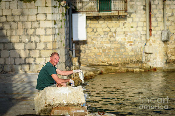 Photograph - Fisherman Cleans Fish At Kastel Gomilica In Kastela, Free City Of Braavos In Game Of Thrones, Split by Global Light Photography - Nicole Leffer