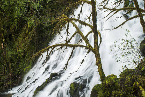 Photograph - Fishhawk Falls by Robert Potts