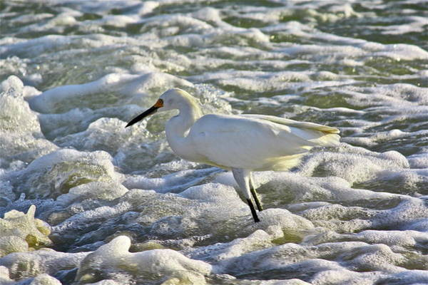 Photograph - Fishing In The Foam by Diana Hatcher