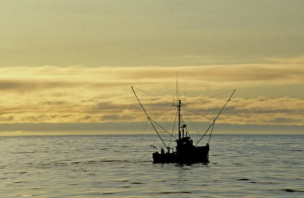 Photograph - Fishing Off Santa Cruz by David Shuler