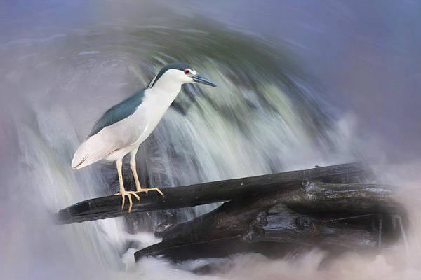Photograph - Fishing The Falls by Robin-Lee Vieira