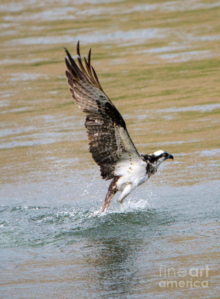 River Hawk Photograph - Fishing The Yakima by Mike Dawson