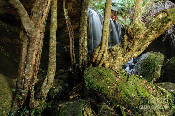 Photograph - Fitzroy Falls 01 by Werner Padarin