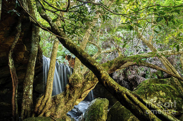 Photograph - Fitzroy Falls 02 by Werner Padarin