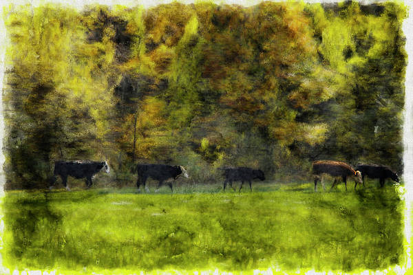 Photograph - Five Cows Walking In Line On A Beautiful Fall Day. by Rusty R Smith