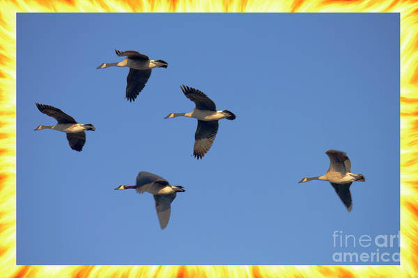 Digital Art - Five Geese Fly Blue Sky by Donna L Munro