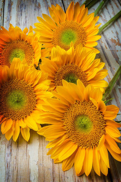 Paint Chips Photograph - Five Moody Sunflowers by Garry Gay