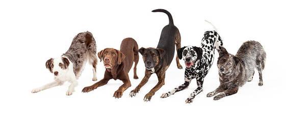 Wall Art - Photograph - Five Playful Dogs Bowing by Susan Schmitz