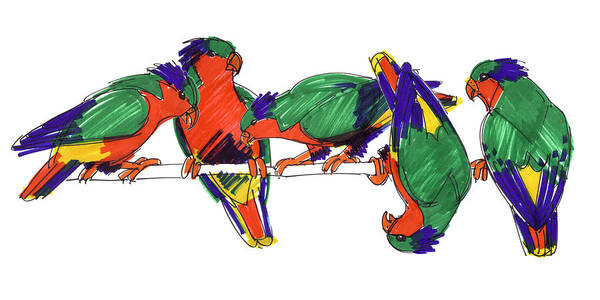 Drawing - Five Rimatara Lorikeets by Judith Kunzle