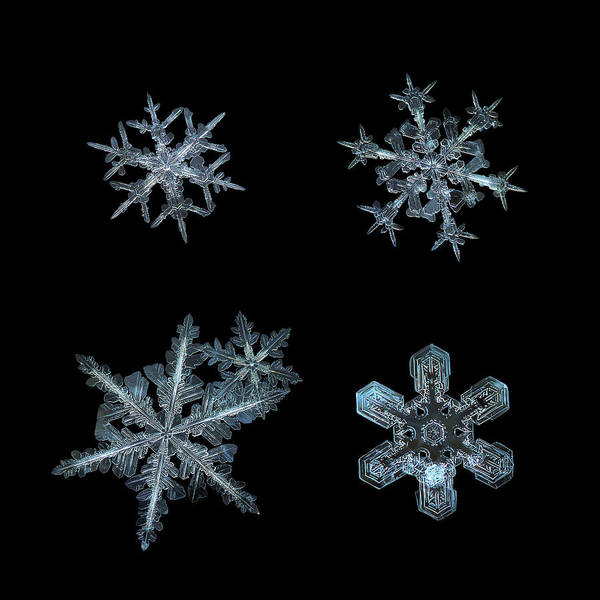 Photograph - Five Snowflakes On Black 3 by Alexey Kljatov