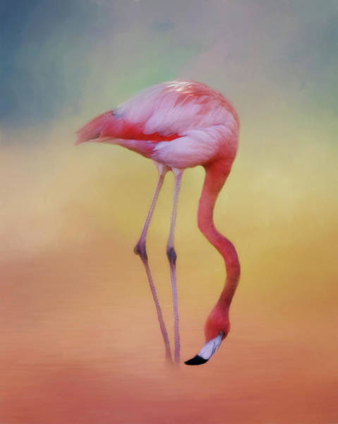 Wall Art - Photograph - Flame Colored Wader by Lana Trussell