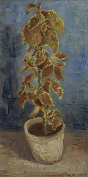 Painting - Flame Nettle In A Flowerpot Paris June   July 1886 Vincent Van Gogh 1853  1890 by Artistic Panda