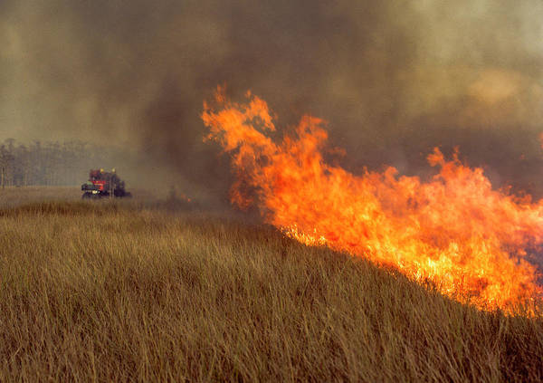Photograph - Flames On The Sawgrass by Robert Potts