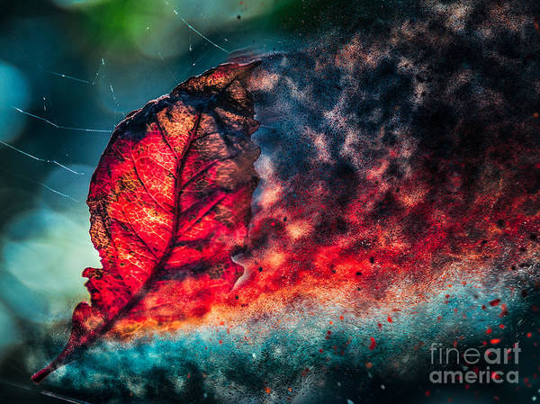 Photograph - Flaming Fall Color by Michael Arend