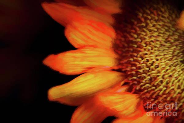 Sunflower Seeds Photograph - Flaming Sunflower by Darren Fisher