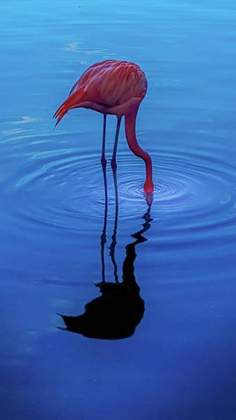 Wall Art - Photograph - Flamingo 1 by Art Spectrum