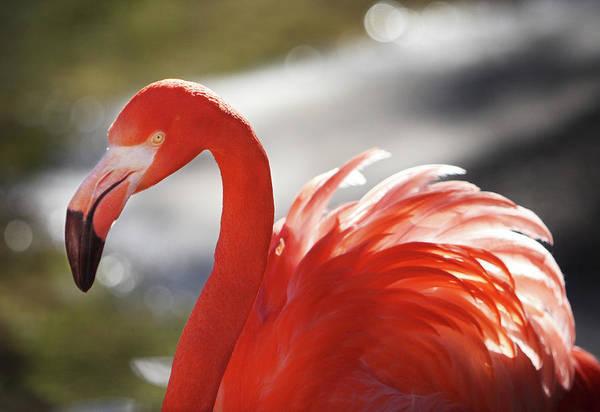 Flamingo 2 Art Print