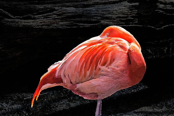 Photograph - Flamingo - 8331 by G L Sarti