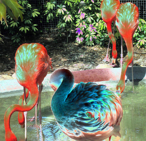 Photograph - Flamingo Abstract 2 by Elyza Rodriguez