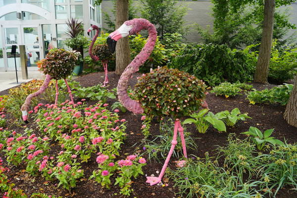 Wall Art - Photograph - Flamingo And Flowers by Beth Collins
