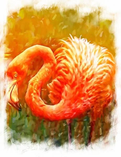 Photograph - Flamingo Bordered by Alice Gipson