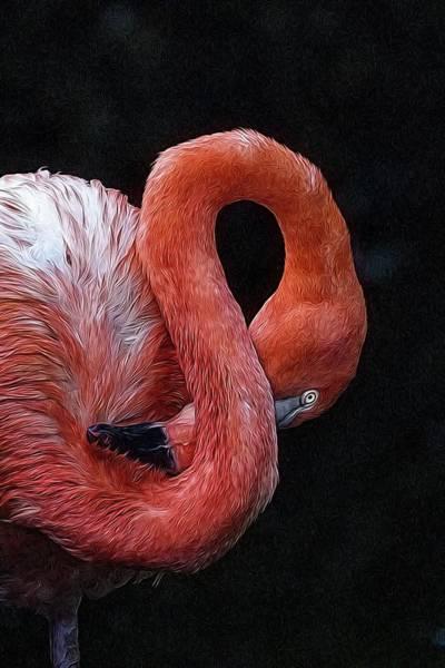Photograph - Flamingo Coy by Alice Gipson