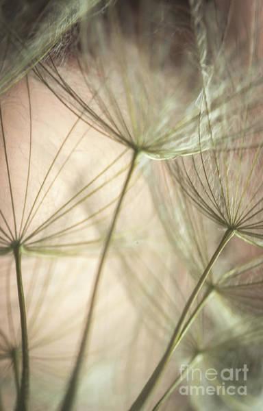 Wall Art - Photograph - Flamingo Dandelions by Iris Greenwell