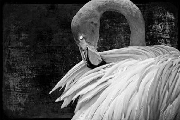 Photograph - Flamingo Darkened by Alice Gipson